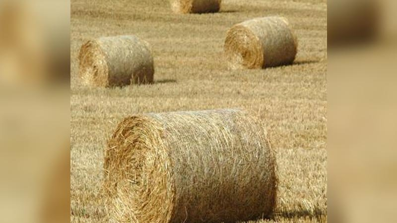 A hay donation lottery program set up in North Dakota to help drought-stricken ranchers is being expanded to producers in South Dakota and Montana