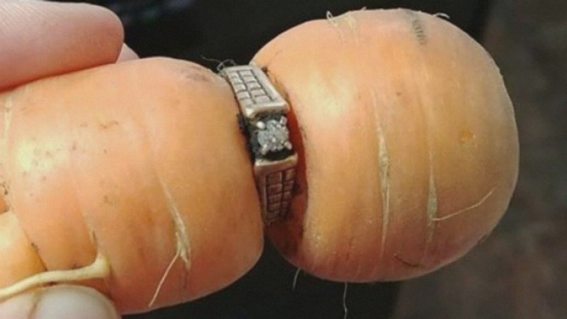 Long-lost diamond engagement ring found wrapped around a carrot in a garden