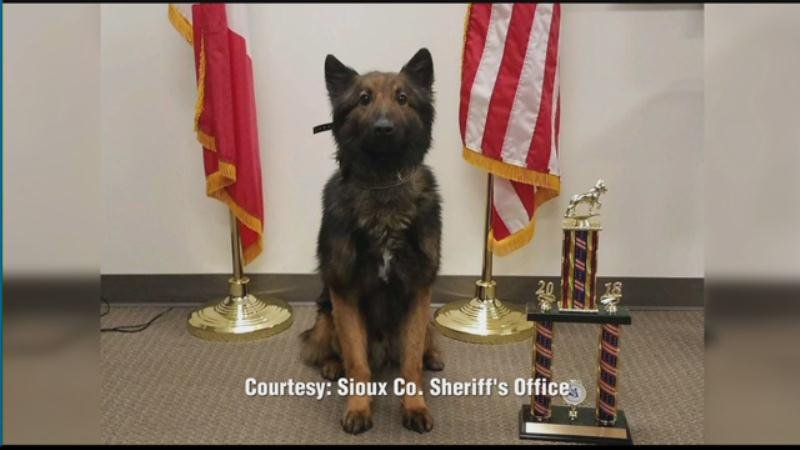 A Sioux County Sheriff's Deputy and his canine partner place second in a national competition - KTIV 1