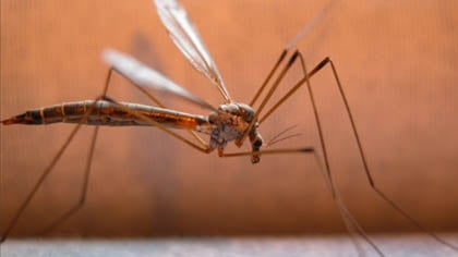Health officials say this summer's dry weather has made people worry less about mosquitoes.