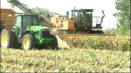 Corn is cut down for silage near Waterloo, Iowa on August 23