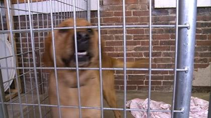 If the animals at the Humane Society shelter in Pocahontas, Iowa, don't find a new place to live soon, they could be put to sleep.