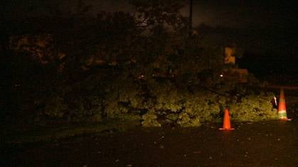 Traffic cones are placed around one of the man trees that were blown down by a storm in Merrill, Iowa Tuesday night