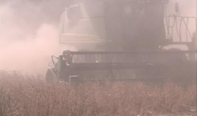 A South Dakota State agronomy specialist says the harvest might be done in record time.