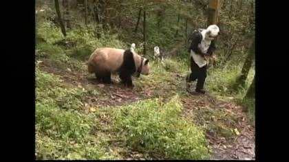 It may be October, but animal keepers in China aren't dressing up because of Halloween.