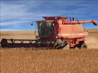 Northwest Iowa farmers, with 91 percent of their corn acreage harvested.