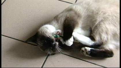 Klemens was caught red-pawed stealing things from his shelter.