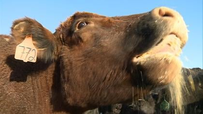 Due to that drought, beef prices are on the rise, which experts say won't level off for a few years.