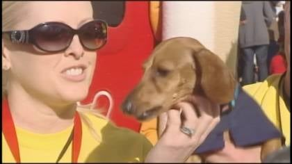 Oscar, a brown wiener dog from Tucson, Arizona, beat his rivals in a nose to nose race to the finish.