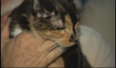 Holly had walked from Daytona Beach all the way down Florida to within one mile of her home in West Palm Beach.