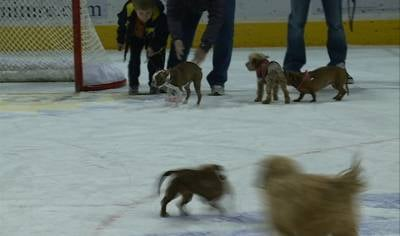 A dozen dogs raced to raise funds for the Siouxland Humane Society.