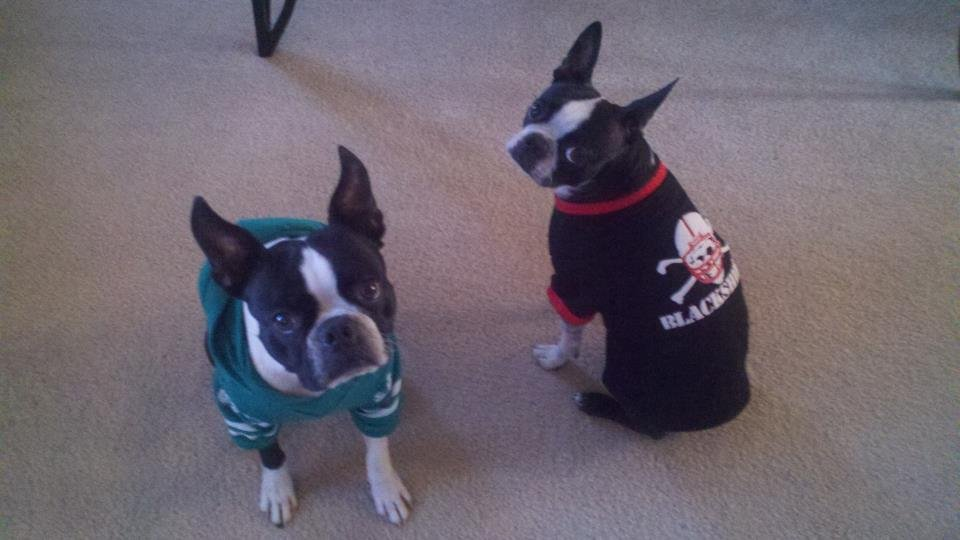 Here are some 'National Dress-Up Your Pet Day' pictures sent in by our viewers.