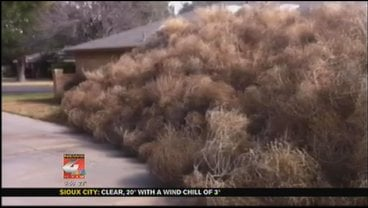 You can make out some of Josh Pitman's home underneath all those tumbleweeds.