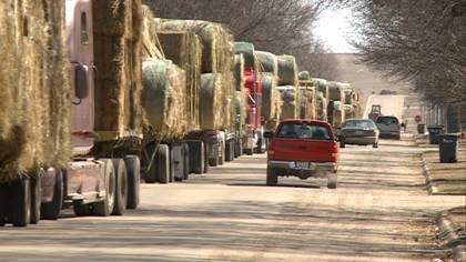 "© ""Prices have come up a lot. And that's luring in more hay,"" said McGill."