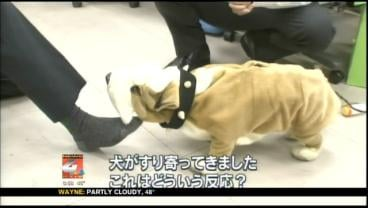 Shuntaro is a robotic dog equipped with a sensor that can detect four levels of foot odor.