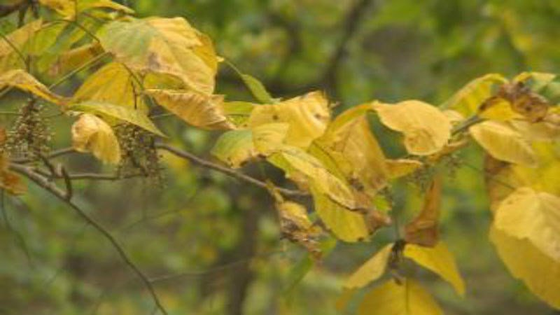 The Iowa Department of Natural Resources says the weekend of October 10th is the best time to view peak fall colors in Iowa.