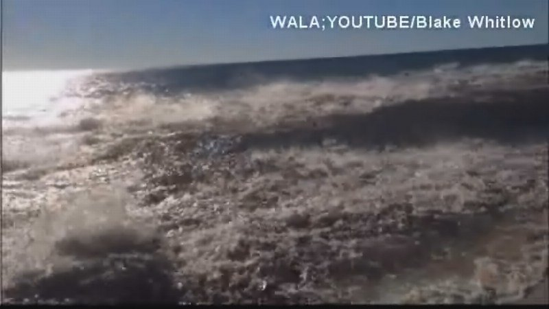Man Films Shark Feeding Frenzy in Florida